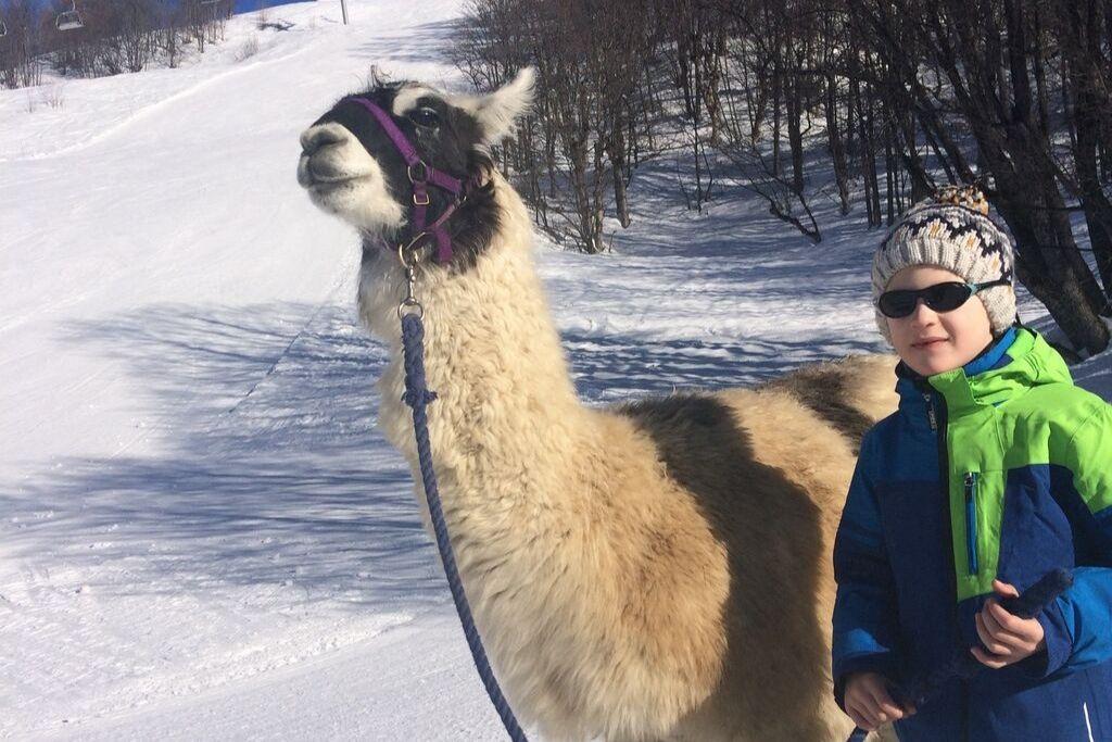 Lama-Wanderung im Schnee