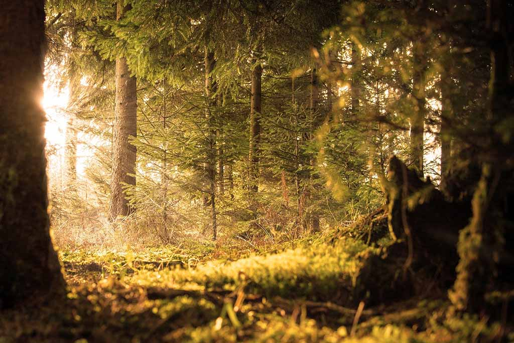 Zauberweg am Hasenhorn Schwarzwald