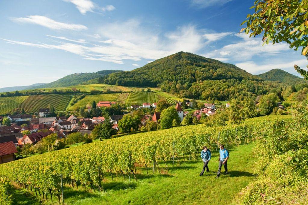 Der Pfälzer Weinsteig führt entlang uriger Weindörfer durch den Pfälzerwald und die Weinberge der Rheinebene.