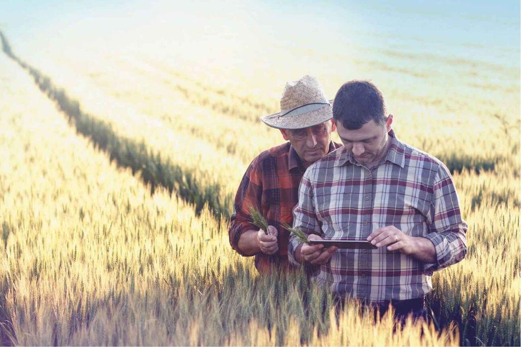 Zwei Landwirte stehen im Getreidefeld und schauen auf ein Handy