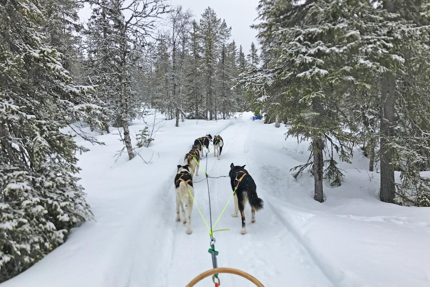 hondenslee wintersport