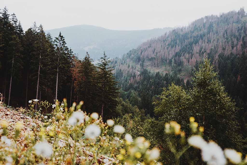 Genußwanderung Harz